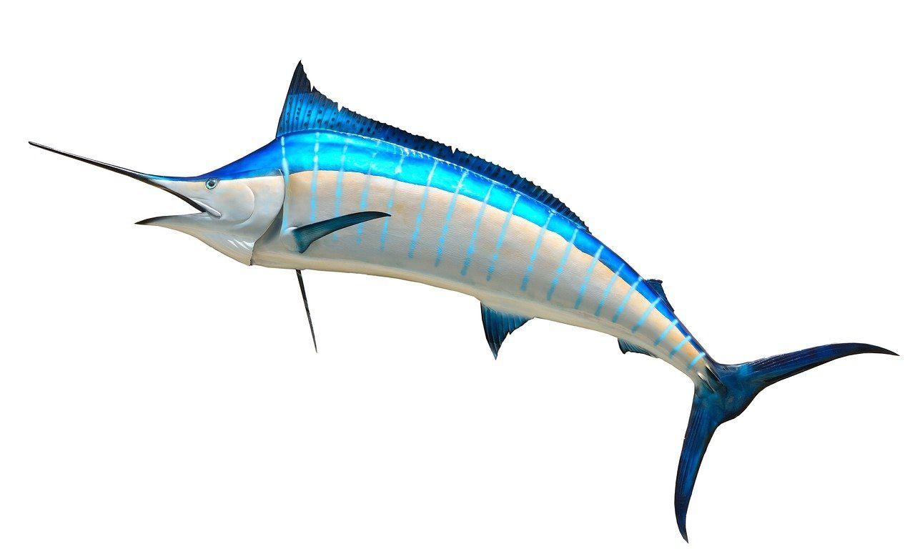 The J.R. Arnold High School Marlins were named 23rd best high school mascot in Florida by Aceable Drivers Ed