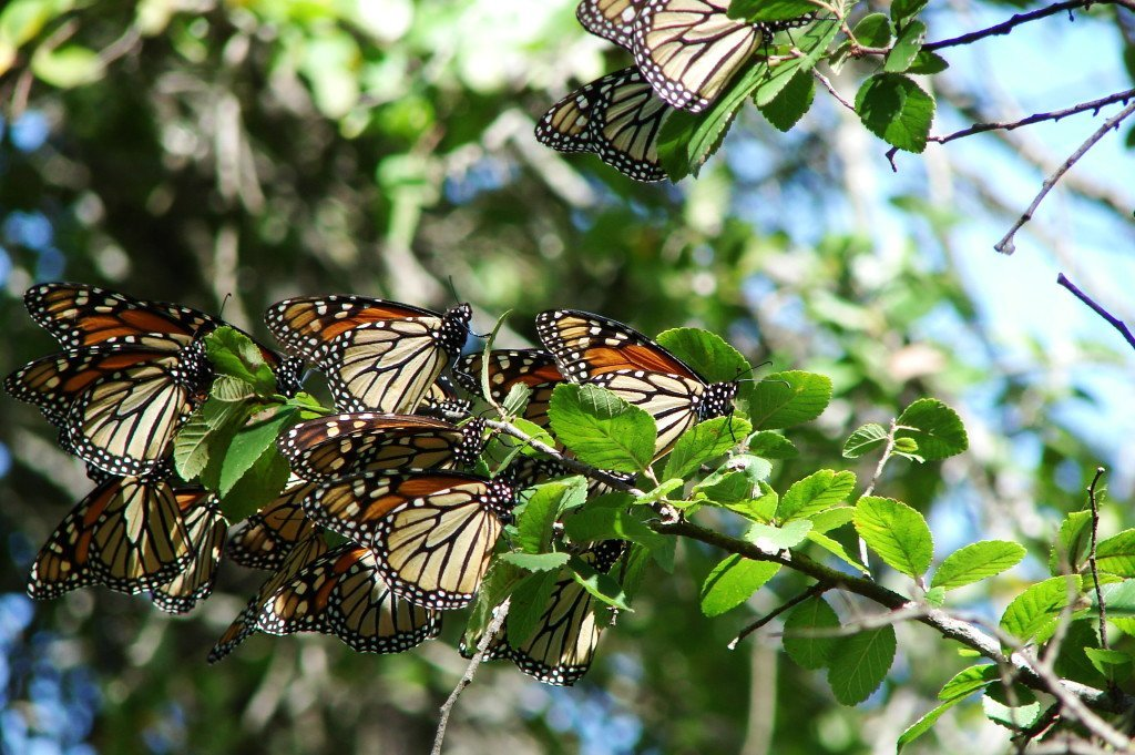 see the butterfly house at Texas Discovery Gardens.