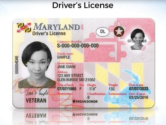 maryland driver license
