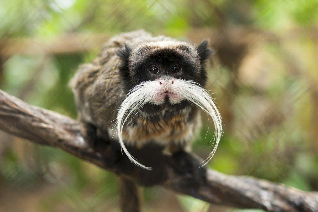 see monkeys and more at the Dallas World Aquarium