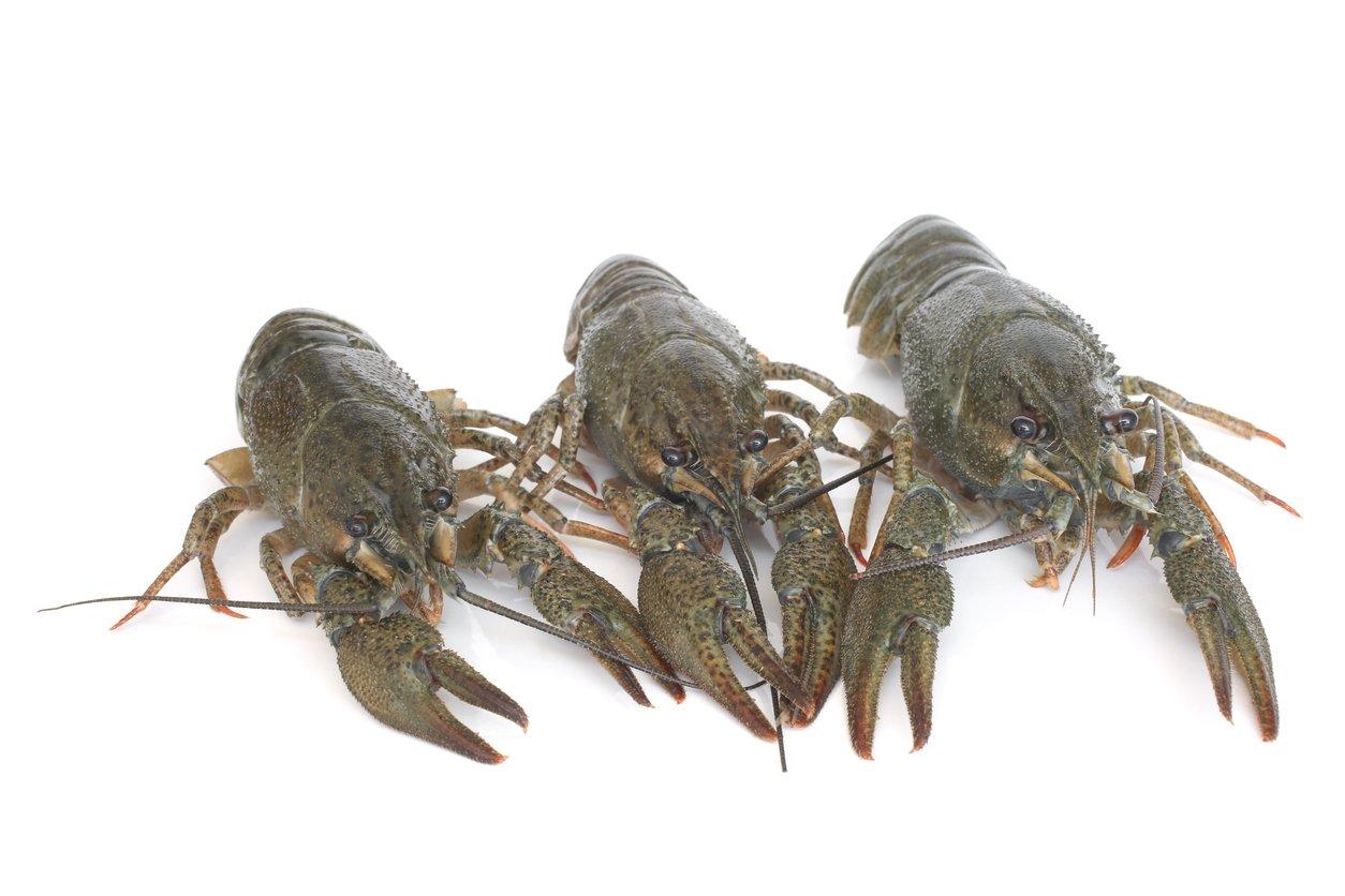 How to store crawfish
