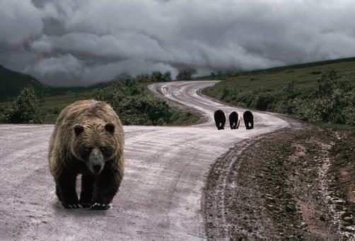 Sharing the road animals alaska driving