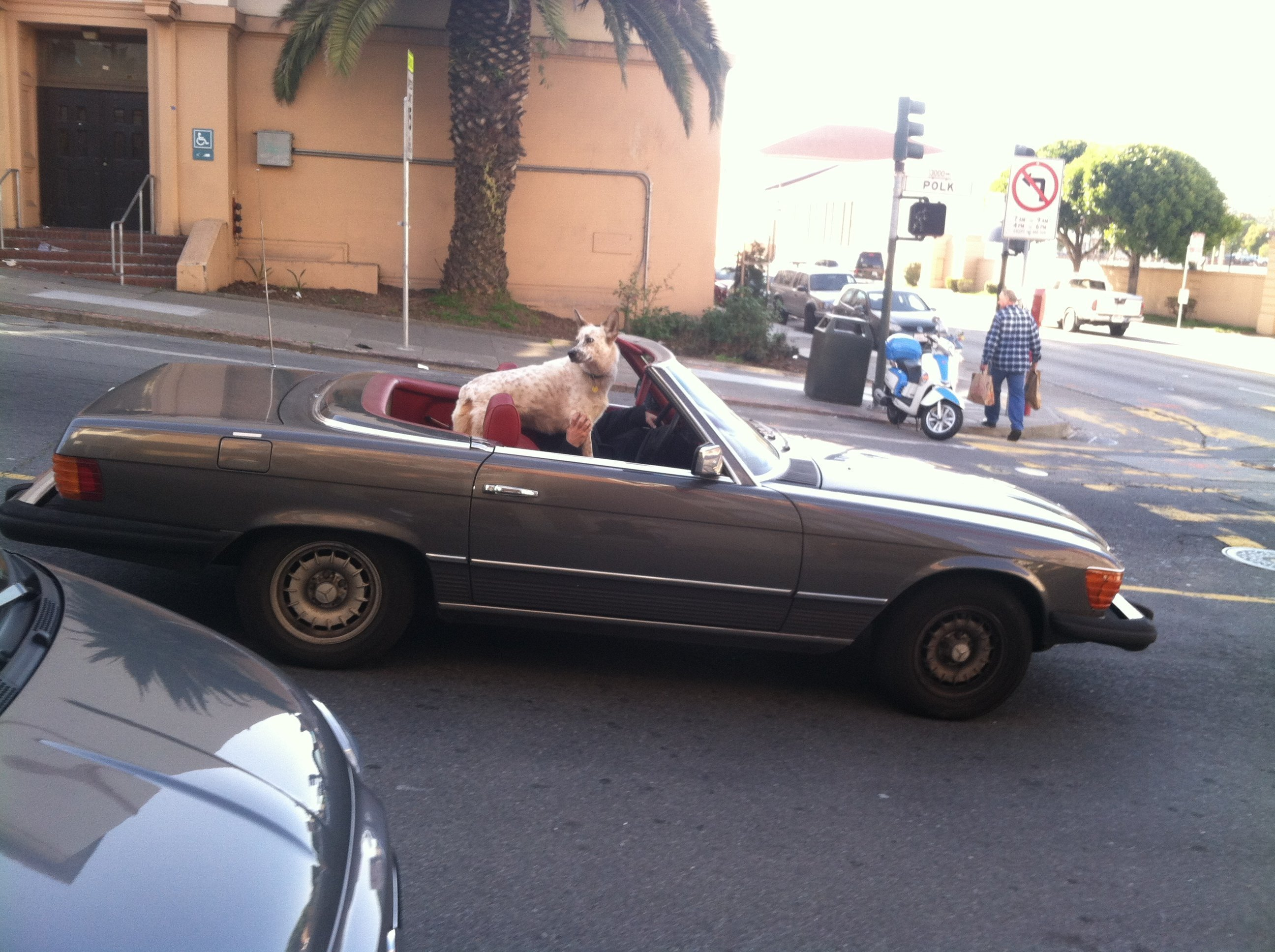 man drives dog in convertible