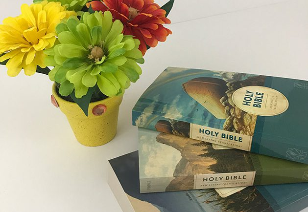 three bulk Bibles for churches on white tabletop next to yellow flowerpot with yellow, green and orange blossoms