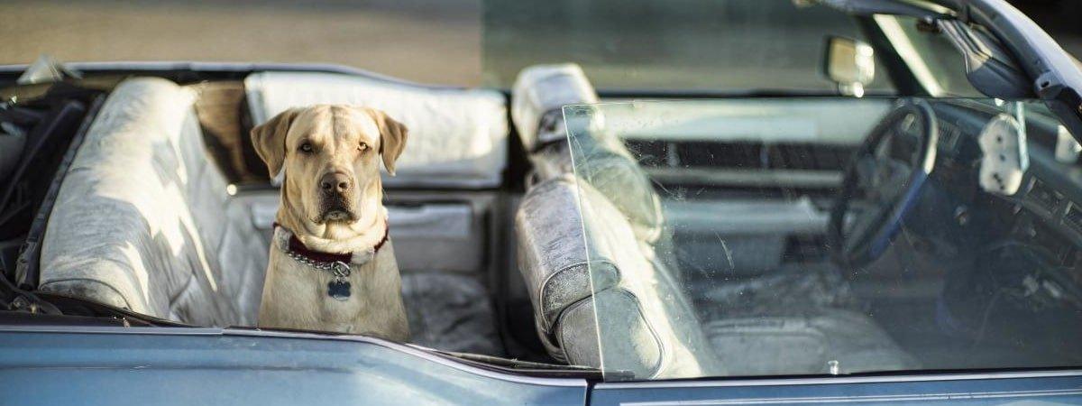 Kia Finance Bad Credit >> Top 10: best dog friendly cars